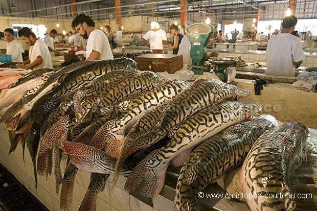 Christophe courteau photographe for River fish market